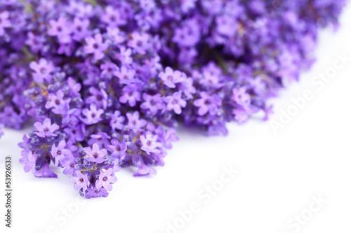In de dag Lavendel Lavender Flowers