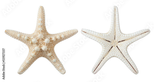 Fototapeta  starfish isolated on white background