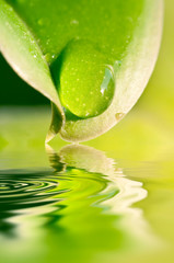 Panel SzklanyGoutte d'eau sur une feuille, reflets