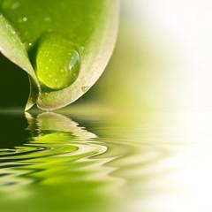 FototapetaGouttes d'eau sur une feuille, reflets