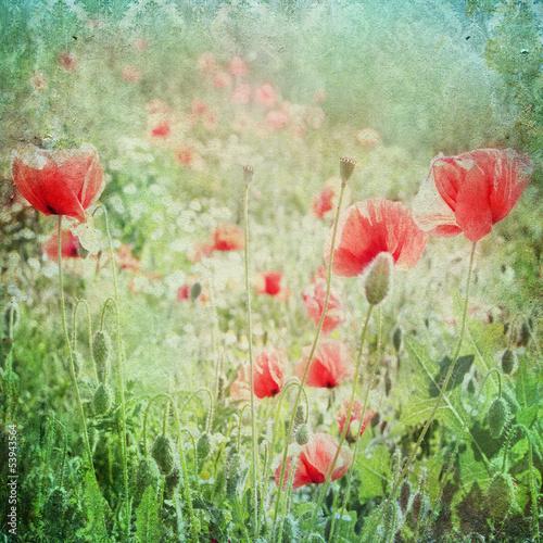Foto-Duschvorhang - Vintage shabby chic background with red poppy (von Kanea)