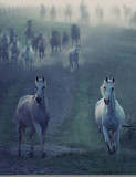 Wild horses running through the rular path - 53943743