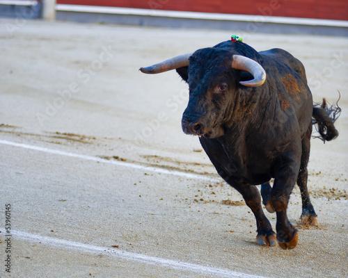 Bullfighting. Spanish Fiesta