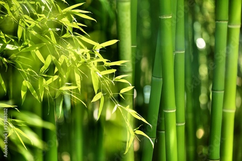 Photo sur Aluminium Bamboo Bamboo forest
