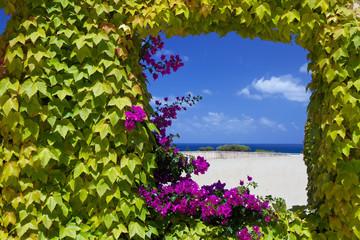 FototapetaFinestra naturale con fiori di petunie.