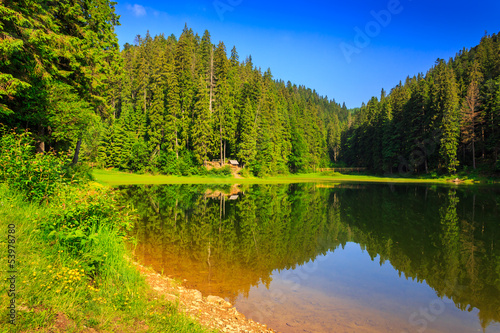 Foto op Aluminium Pistache spruce forest and lake early in the morning