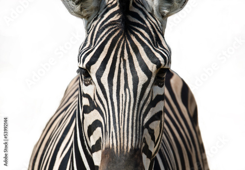 Stickers pour portes Zebra Isolated zebra