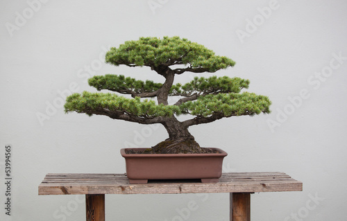 Stickers pour porte Bonsai bonsai plants