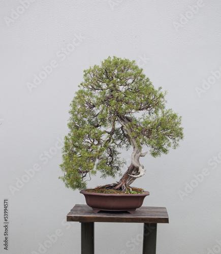 Fotobehang Bonsai bonsai plants