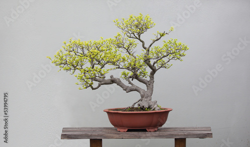 Photo Stands Bonsai bonsai plants