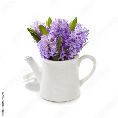 Fototapeta Beautiful Hyacinths obraz na płótnie