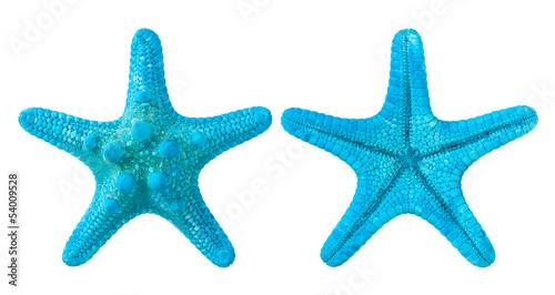 Fotografia blue starfish isolated on white background
