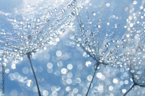 Deurstickers Paardebloemen en water dandelion seeds with drops