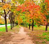 Alejka w parku jesienną porą