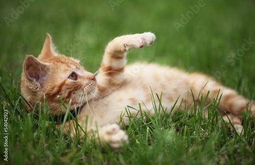 Keuken foto achterwand Kat Little cat playing in grass. Selective focus, shallow DOF.