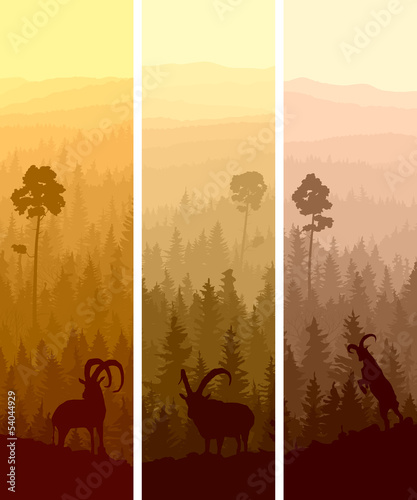 vertical-banners-of-hills-coniferous