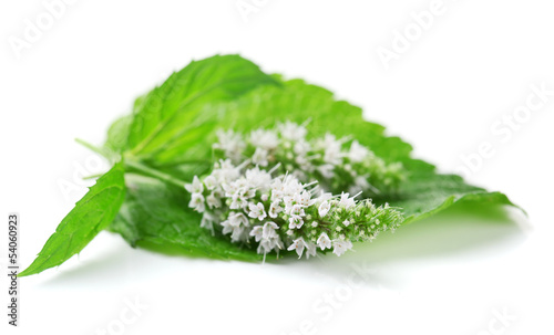 Wall Murals Lily of the valley Fresh mint flowers isolated on white