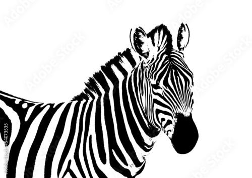 Poster de jardin Zoo zebra vector