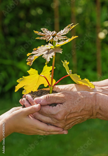 Fotobehang Planten tree planting - hands with little tree - an ecology concept