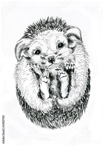 Canvas Prints Hand drawn Sketch of animals Ёж hedgehog isolated on white