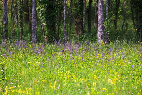 Fototapeta Grass obraz na płótnie