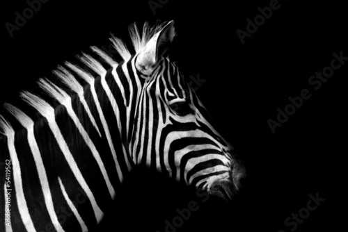 Photo Stands Zebra Zebra