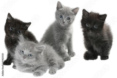 szary-i-czarny-kociat-siedziec-odizolowywam