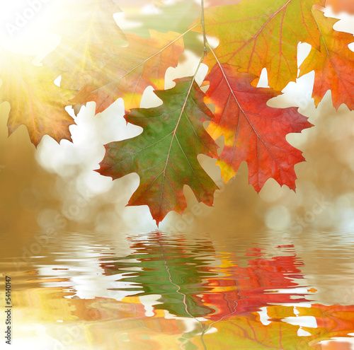 Autumn oak leaves mirrored on water level - 54140147