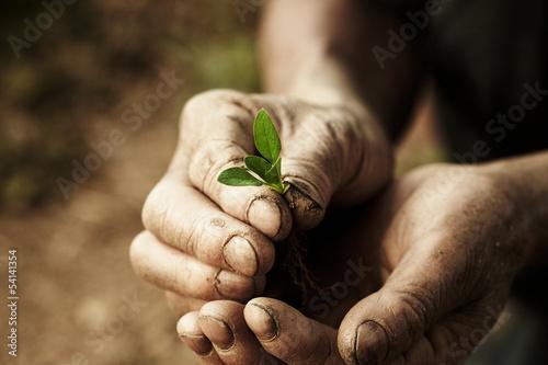Cuadros en Lienzo farmer hands holding a plantlet.