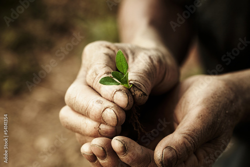 Foto farmer hands holding a plantlet.