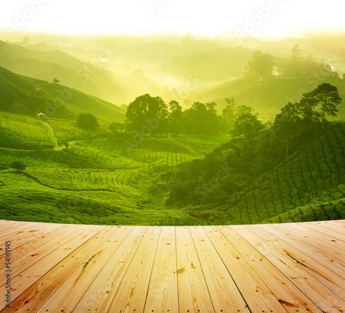 Carta da parati Tea farm