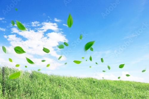 草原に舞い散る葉っぱ Billede på lærred