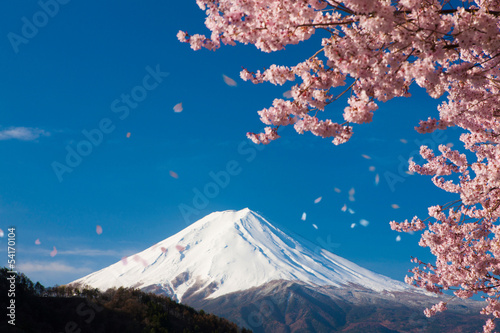 Fotografie, Obraz  富士山と舞い散る桜