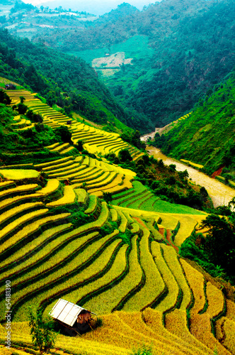 Poster Jaune Rice fields of terraced in Vietnam