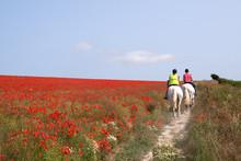 Horses Riding Through Poppies