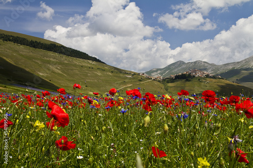 Landscape of Castelluccio di Norcia #54199568