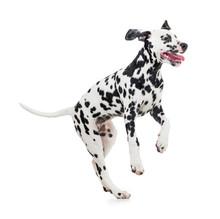 Jumping Dalmatian Dog Isolated On White