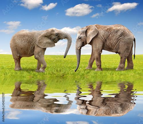 slonie-afrykanskie