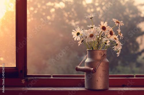 In de dag Madeliefjes Daisy on windowsill
