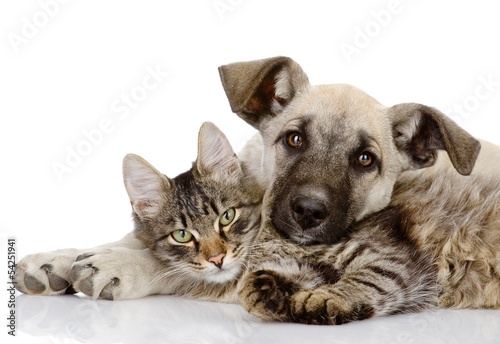 Photo  the dog and cat lie together. isolated on white background