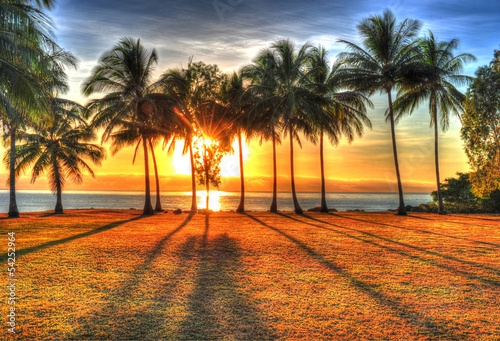 Poster Océanie sunlight rising behind palm trees in HDR picture of Port Douglas