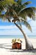 Sunbathing at beach under palm tree