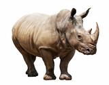 Fototapeta Zwierzęta - rhino on white background