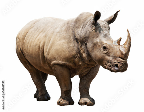 Poster Neushoorn rhino on white background