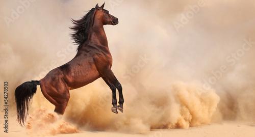 kon-arabski-ucieka-z-pustynnej-burzy