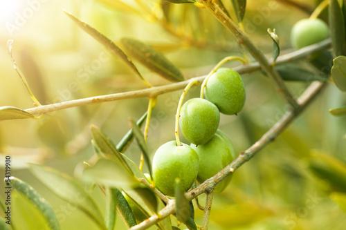 Wall Murals Ripe green olives