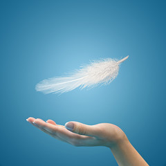 Easy feather in the air on the palm