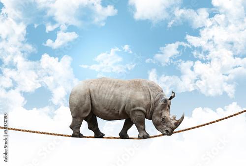 Poster Rhino acrobat rhino