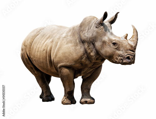 Tuinposter Neushoorn rhino on white background