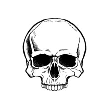 Black And White Human Skull Wi...